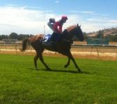 Another Winner for ZUPAONE