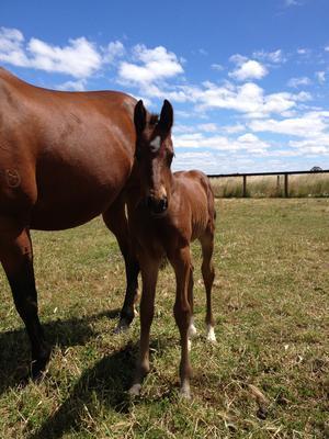 Latest Hollylodge Born Foal