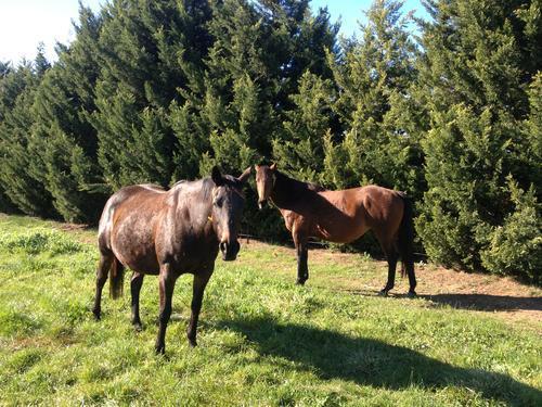 Gearing Up For Breeding Season at Hollylodge