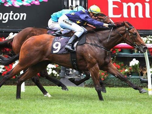 WANT TO ROCK WINS AT FLEMINGTON FIRST START