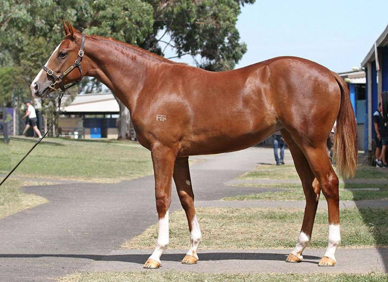 RECORD SALE PRICE FOR WRITTEN TYCOON FILLY AT PREM 2 SALE.jpg