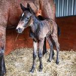 First foal of the season at Hollylodge
