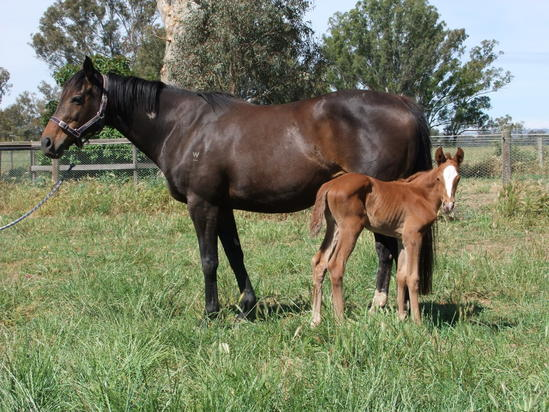 Vale - May's Dream born at Hollylodge