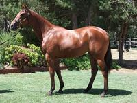 Inglis Prem 2 sale Lot 577 Reward for Effort x Quality Time filly