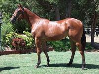 Inglis Prem 2 sale Lot 769 Reward for Effort x Our Girl Charlize filly