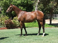 INGLIS PREM 2019 - Lot 597 REWARD FOR EFFORT X EL CHICKIE FILLY