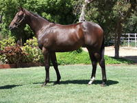 INGLIS PREM 2019 - Lot 692 TRUST IN A GUST X MONTANA HILTON FILLY