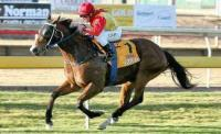 Essington wins Newmarket Handicap
