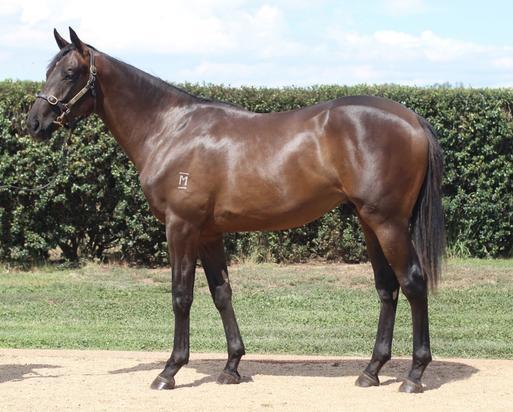 Sensational Shocking colt for sale