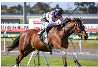 Not An Ambiturner wins at Geelong