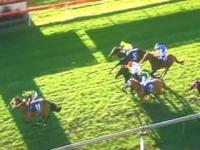 Storm Ahead Wins Wauchope Cup In First Run For The Stable