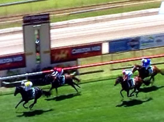 Zinging Returns With A Nice Second At Port Macquarie Meeting