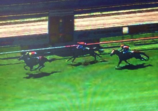 Consistant Galloper Zinging Makes It 5 x Second's In A Row