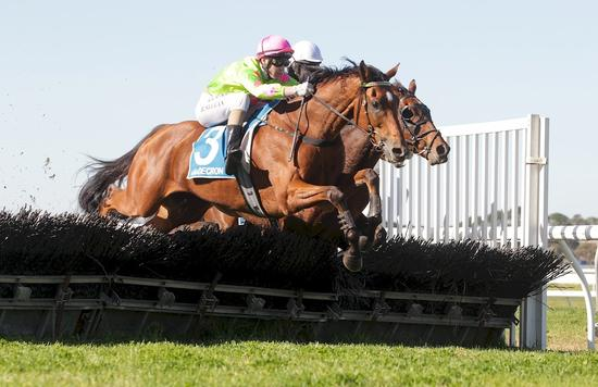 COUGAR WINS MAIDEN HURDLE