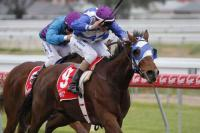 Perfect record for Sparks progeny