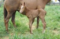 First foal for Breeding Season