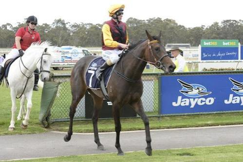 More winners for Dual Spark progeny