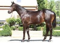 Wingrove Park offer superb Inglis draft
