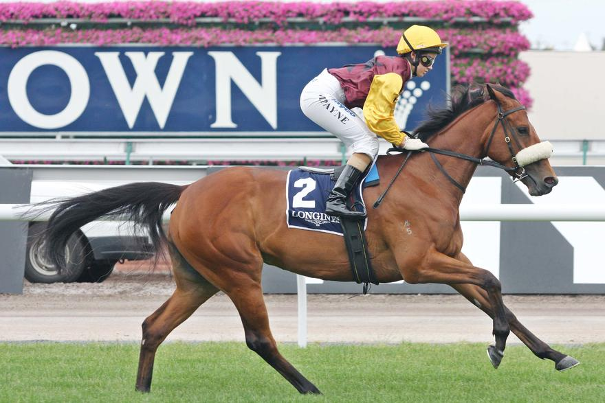 Sparks Fly is ready to resume on Saturday at Sandown. Photo courtesy racepixvic.com.au.JPG