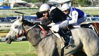 Miss Miao Wins MT Alvernia College QTIS Three-Years-Old Handicap