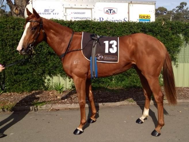 Adelaide Cup For Gilago?