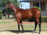 Hat-Trick For Toorak Warrior
