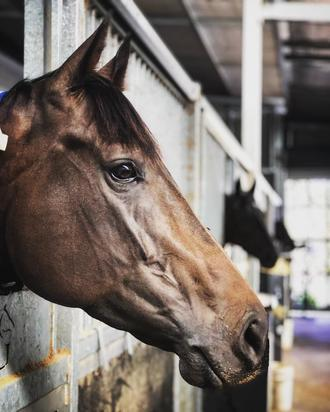 Breakthrough for Miss Matriarch