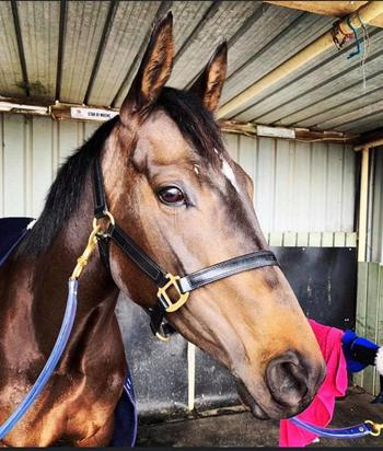 Wycheproof breakthrough for Star Of Moshe