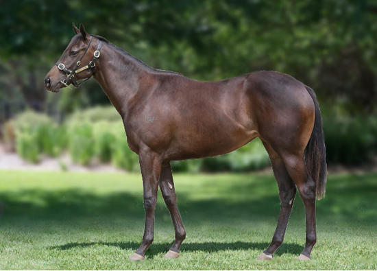 Alpine Eagle X Must Be Mink Filly