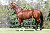 Toronado's first runner a winner!