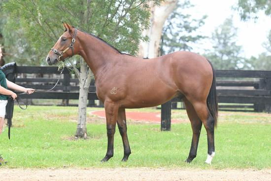Not A Single Doubt X Donna's Appeal Colt