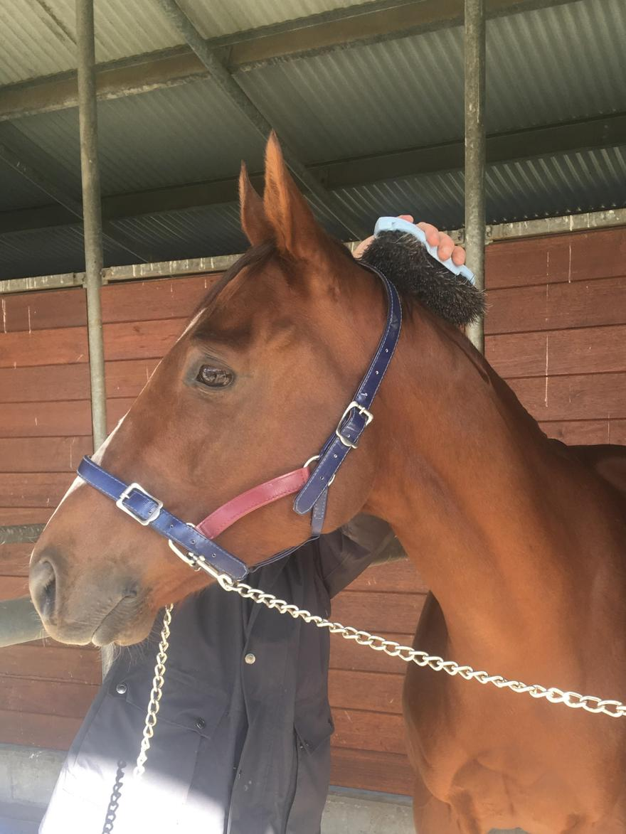 SWEET OUT TO BACK UP FORM RESURGENCE AT RANDWICK
