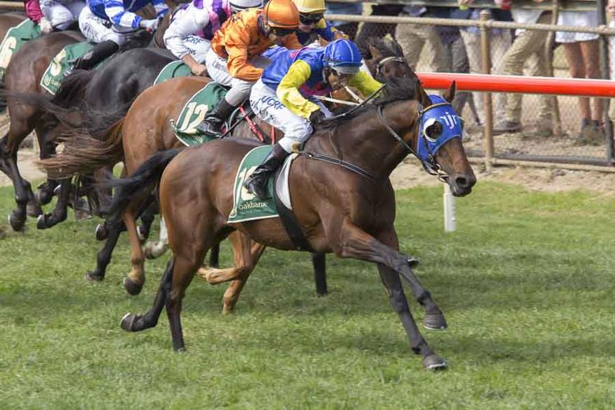 Vintage Grove Wins At Oakbank