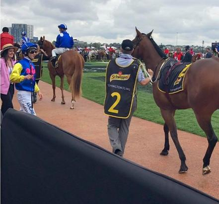 Heaven's Deal Ventures to Flemington on Cup Day