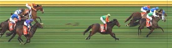 Dexelation wins at Sandown