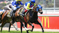 Alleboom Wins At Flemington On Melbourne Cup Day
