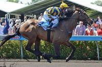 3 WINNERS, NEIL DOMINATES THE NT RACING TODAY.