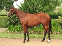 Get in quick to be part of this exciting filly!