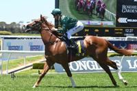 COSIMO kicks away for an impressive win at Wyong Race Club