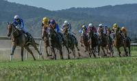 Final Fields For TRJC Murwillumbah Meeting On Tuesday