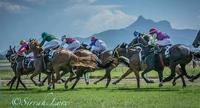 Come & Join Us At The TRJC Club Murwillumbah On Tuesday With 7 Races On The Card
