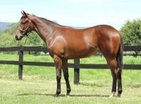 Yearling Filly Looks For Huge Pedigree Update
