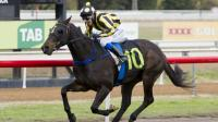 Todd Smart eyes Snake Gully Cup for winner Attainment