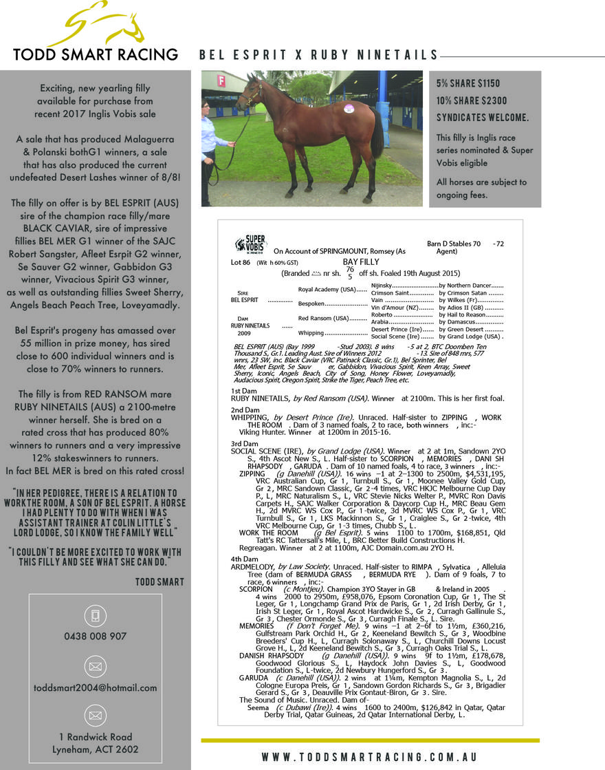 BEL ESPRIT  X  RUBY NINETAILS (yearling available)