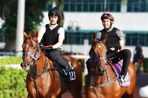 Emperor Max (Michael Rodd, right) and stablemate Libeccio (Vlad Duric) head out to the tracks on Thursday (photos courtesy of Gareth Pepper).