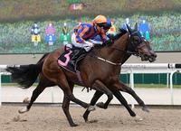 Sky Rocket launches Gold Cup trail with first-up win