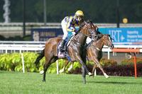 No Cut No Gain for Gray's promising four-year-old