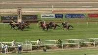 Baby Jack Runs 2nd In The MTC Country Cup At Wagga