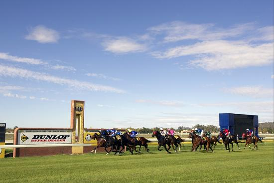 Stable Runners For Wagga Murrumbidgee On Friday