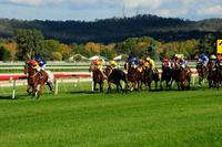 Two Stable Runners To Compete On Thursday At Wagga Murrumbidgee
